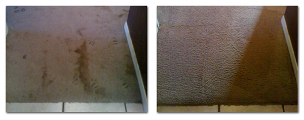 carpet cleaning services in boise idaho